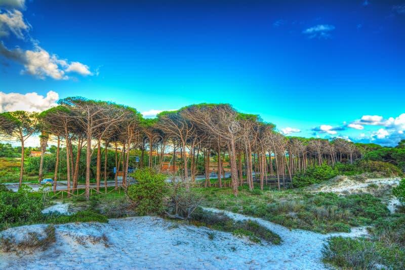 Piasek diuna w Maria Pia plaży obraz royalty free