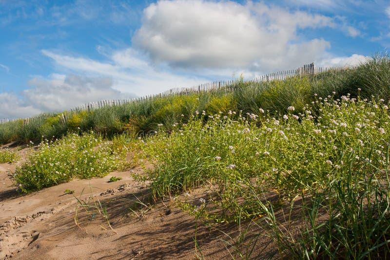 Piasek diuny konserwaci miary na plaży w Lahinch w zachodzie Irlandia obraz royalty free