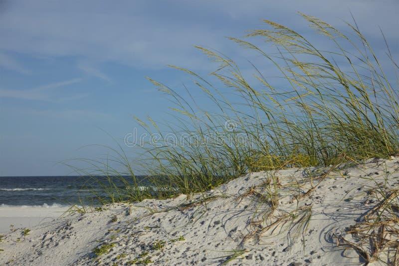 Piasek diuny wzdłuż zatok wysp Krajowego Seashore Floirda zdjęcie stock