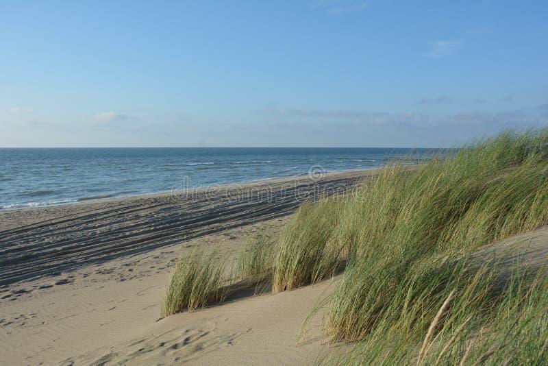 Piasek diuny z diuny trawą na Północnym morzu fotografia royalty free