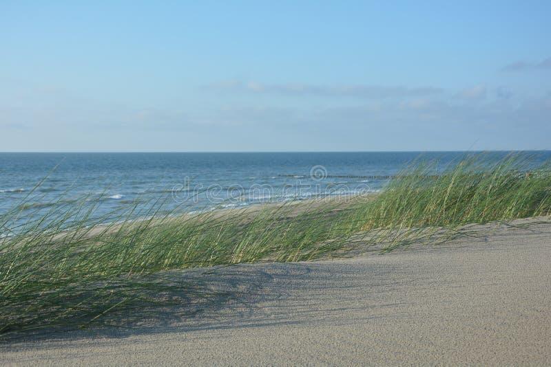 Piasek diuny z wietrzną diuny trawą na Północnym morzu w wiatrze fotografia stock