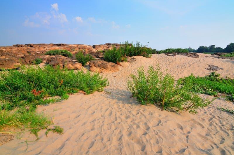 Piasek i pustynne rośliny zdjęcia stock