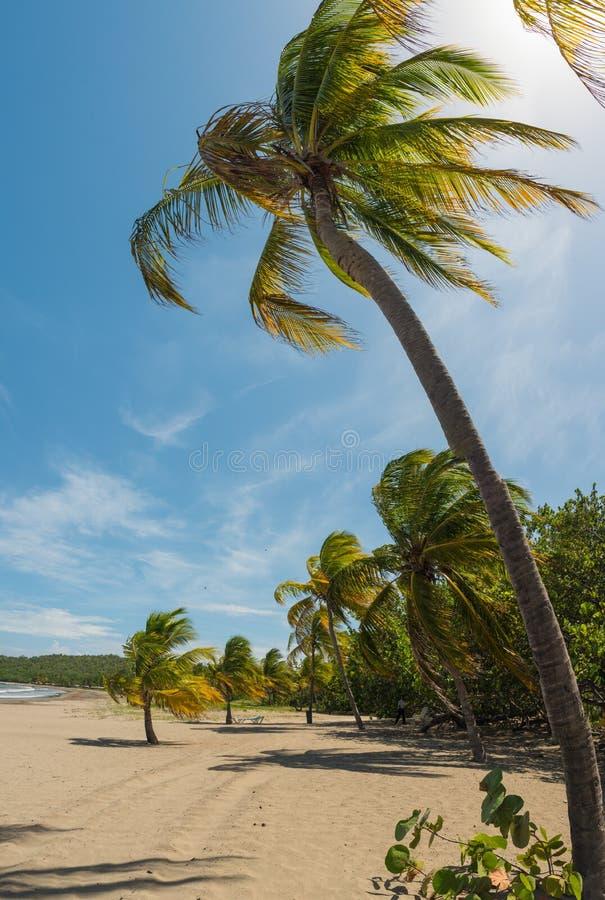 Piasek plaża na morzu karaibskim w Kuba fotografia royalty free