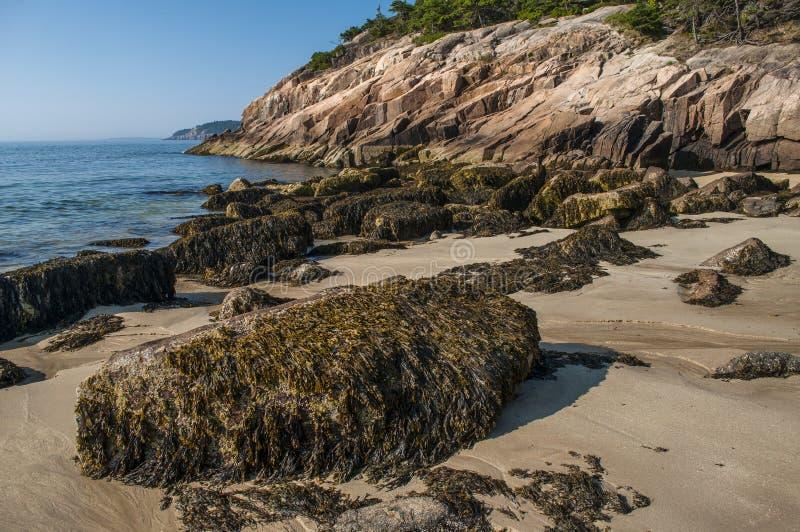 Piasek plaża w Acadia parku narodowym, Maine obraz stock