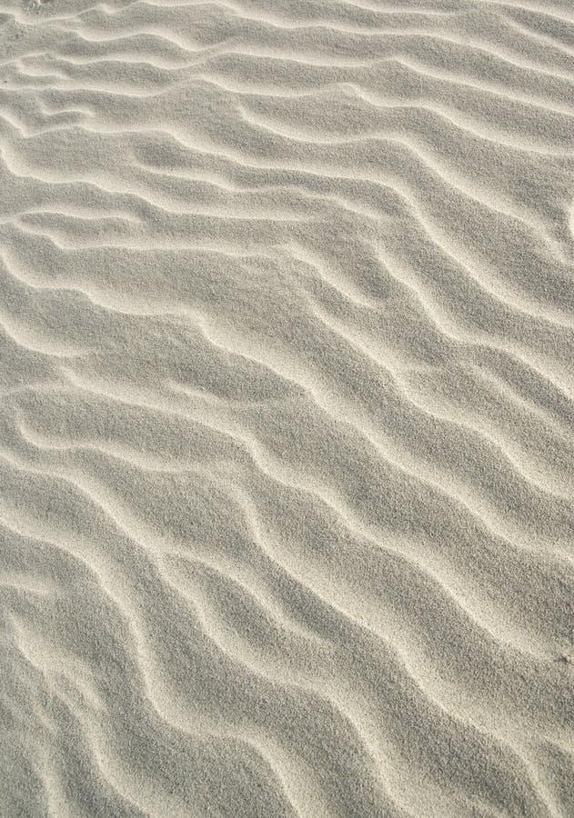 piasek wydm zdjęcie royalty free