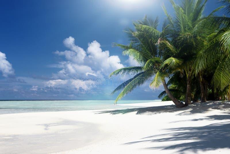 Piasek wyspa z kokosowymi palmami fotografia stock