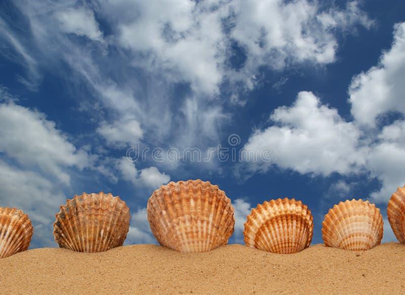 piasków wielcy seashells zdjęcie stock