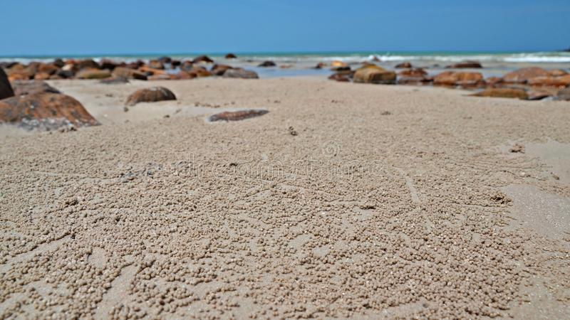 Piaska bubbler kraba piłki na plaży obrazy stock
