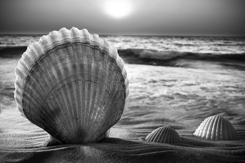piaska morza skorupy zdjęcia stock