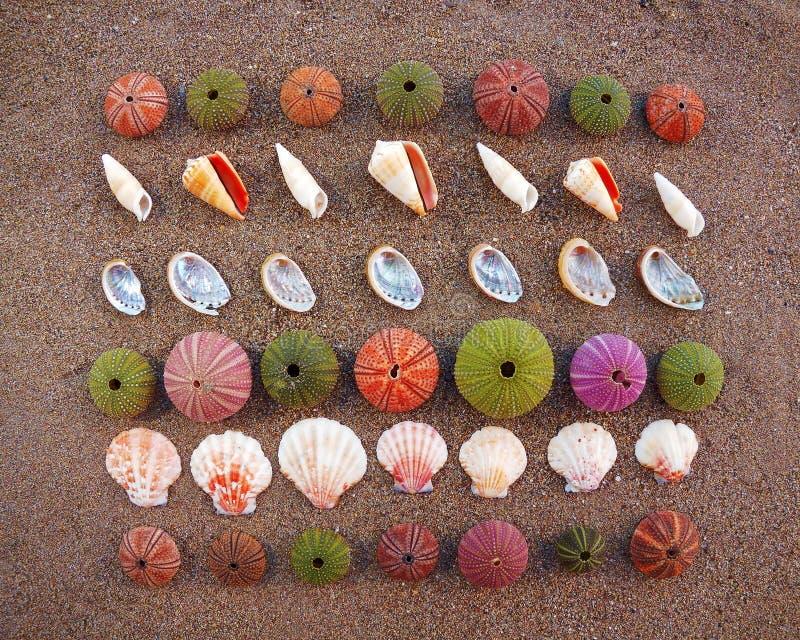 piaska morze łuska czesaków mokrych obraz royalty free