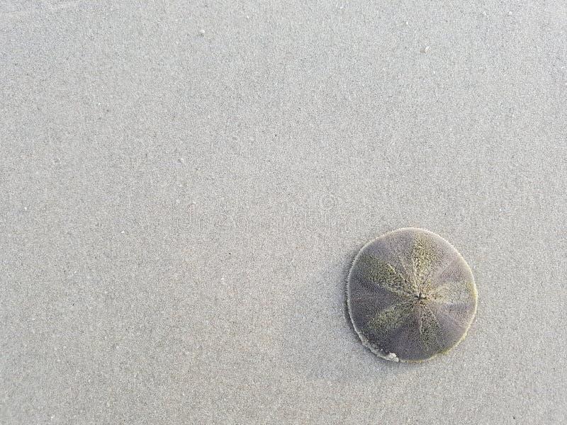 piaska plażowy dolarowy biel fotografia stock