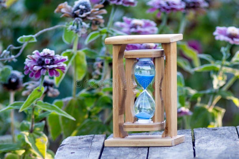 Piaska zegar na tle susi kwiaty cynie Czas jest r zdjęcia royalty free