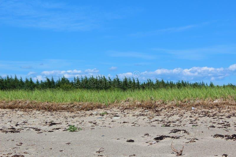 Piaskowata linia brzegowa na przylądek Bretońskiej wyspie z plażową trawą i sosnami w tle zdjęcie royalty free
