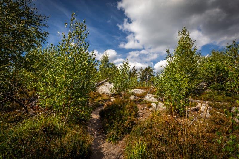 Piaskowaty footpath w zielonym lesie z dramatycznym błękitnym chmurnym niebem, obrazy stock