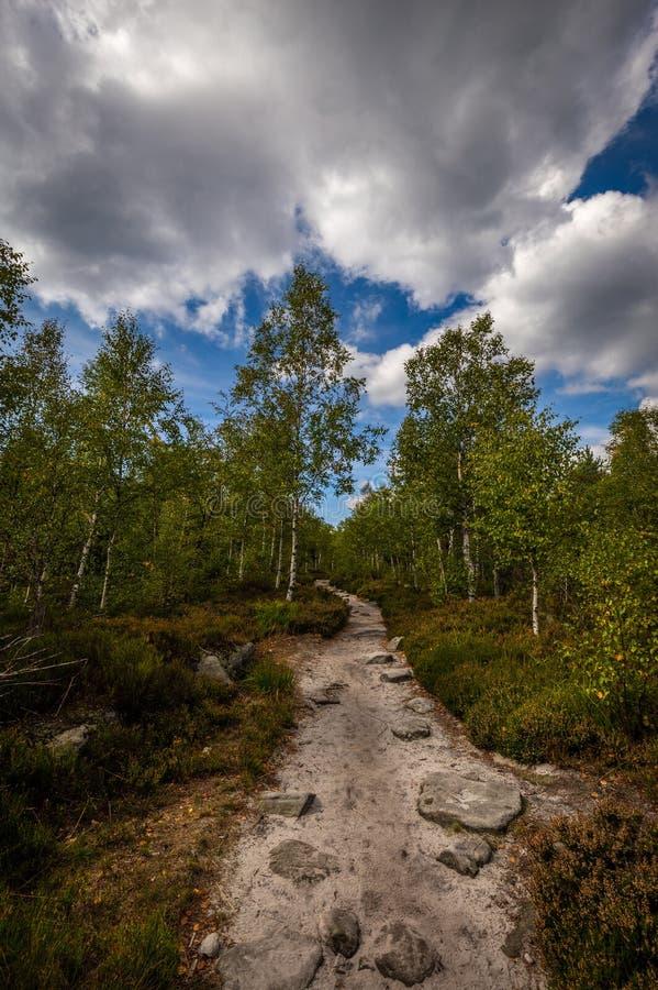 Piaskowaty footpath w zielonym lesie z dramatycznym błękitnym chmurnym niebem kamienny labitynt Bledne skaly, obrazy royalty free