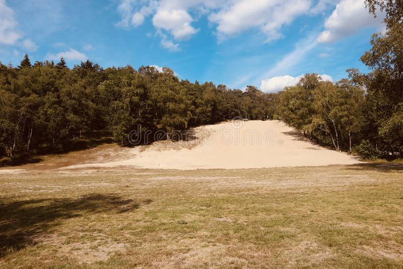 Piaskowaty wzgórze w lato natury holenderskim parku zdjęcie stock