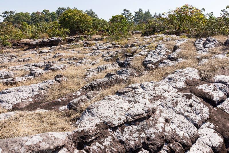 Piaskowcowy guzek na suchej trawy polu obrazy royalty free