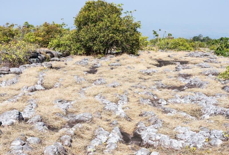 Piaskowcowy guzek z suchej trawy polem fotografia royalty free