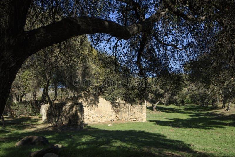 Piaskowiec ruiny pod dębowym drzewem zdjęcie stock