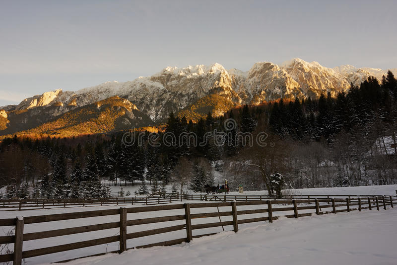 Piatra Craiului mountains. Sleigh pulled by horses in Piatra Craiului national park near in Brasov Romania stock images
