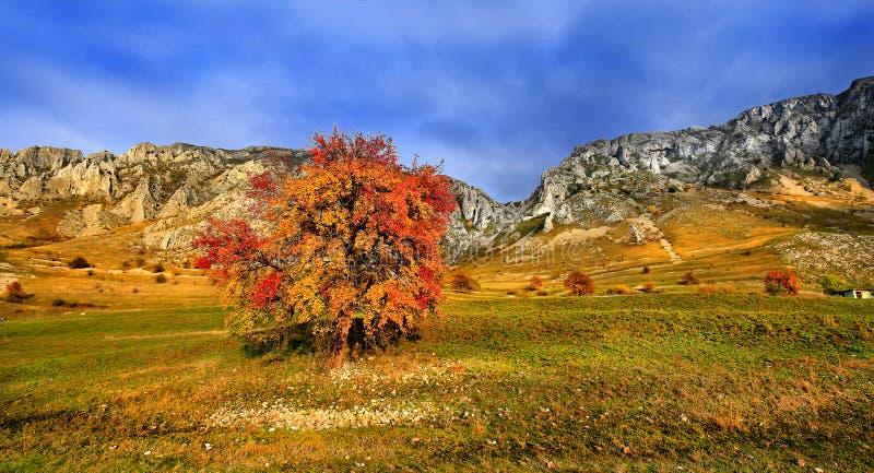 Piatra Secuiului, Trascau berg, Alba County, Rum?nien royaltyfria bilder