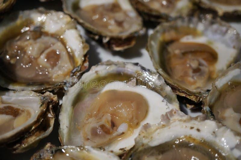 Piatto delle ostriche di recente sgusciate fotografie stock