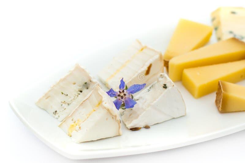 Piatto di formaggio con differenti generi di formaggio con i fiori fotografia stock libera da diritti