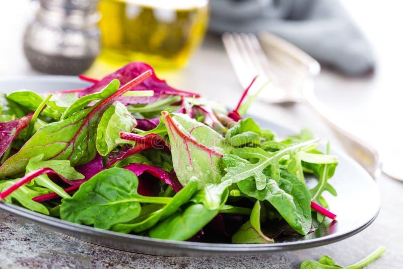 Piatto vegetariano sano, insalata frondosa con la bietola fresca, rucola, spinaci e lattuga Miscela italiana immagini stock