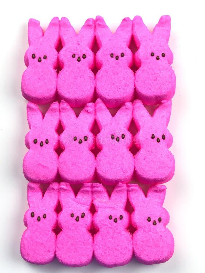 Piaulements roses de Pâques photo stock