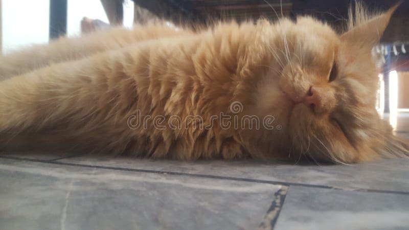 PIC γατών στοκ φωτογραφία με δικαίωμα ελεύθερης χρήσης