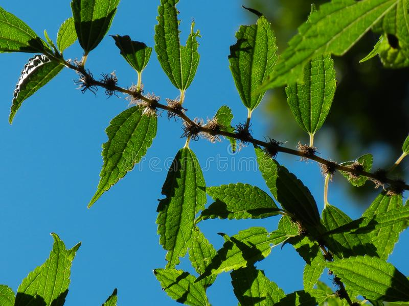 PIC κινηματογραφήσεων σε πρώτο πλάνο ενός κλάδου του δέντρου στοκ φωτογραφία με δικαίωμα ελεύθερης χρήσης