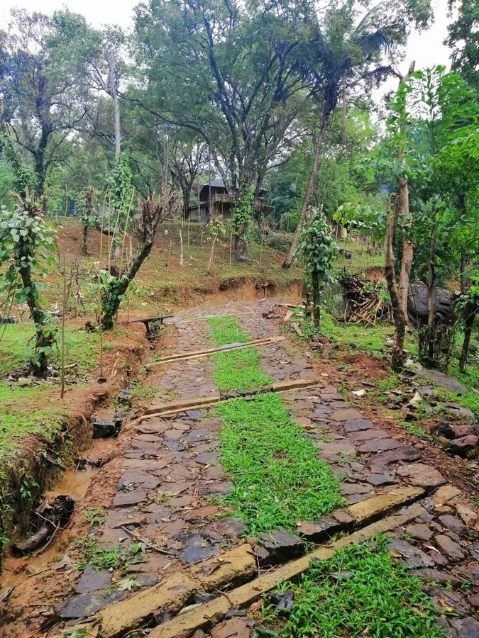 Pic гористого сельскохозяйственного региона на eliya nuwara, Шри-Ланка стоковая фотография rf