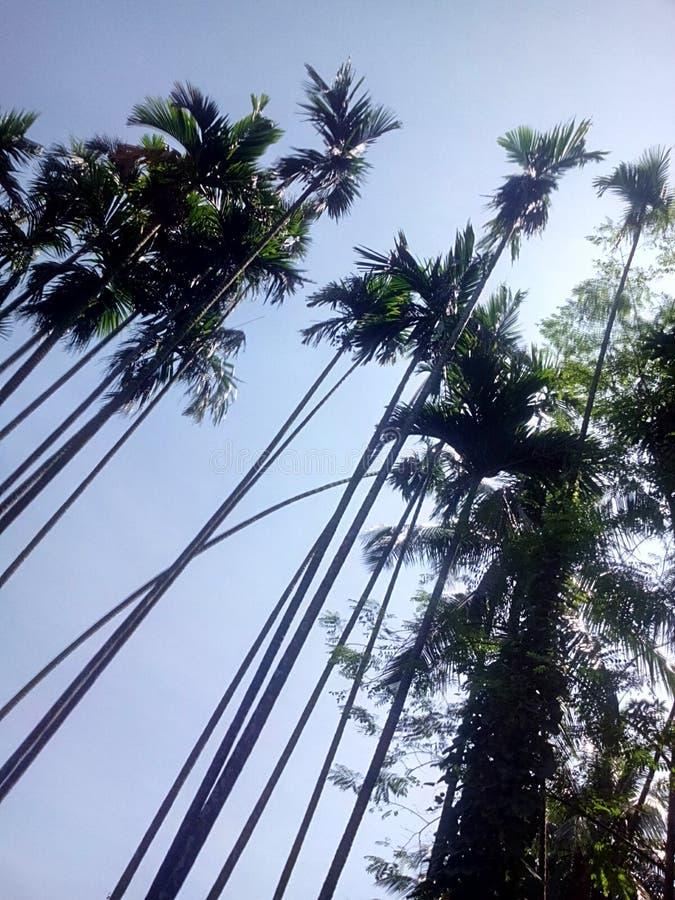 Pic дерева стоковое изображение rf