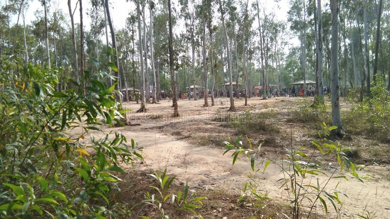 PIC de algumas árvores imagens de stock