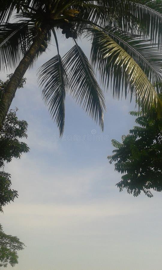 PIC de ciel image libre de droits