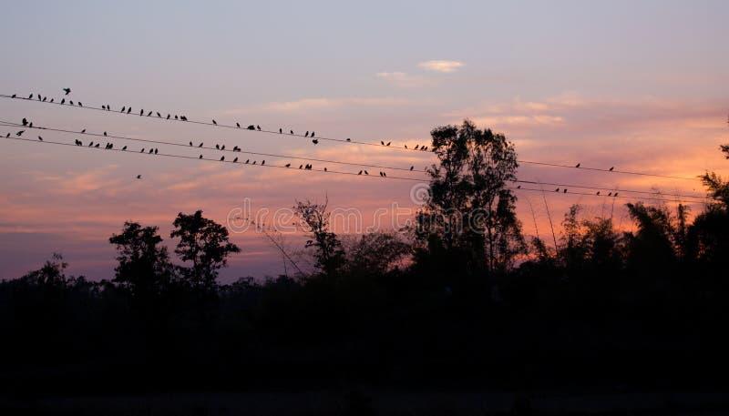 PIC de coucher du soleil au parc national de Kanha image libre de droits