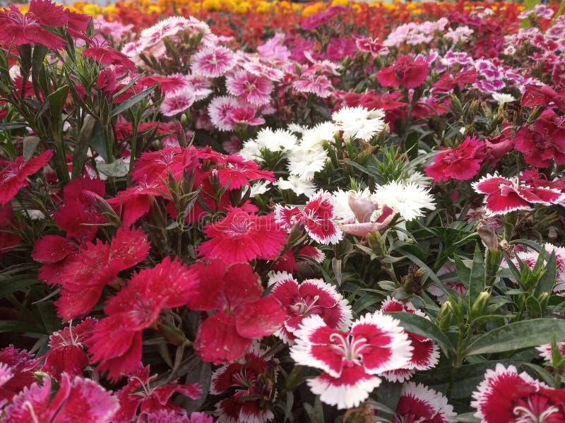 PIC de fleurs prendre par moi avec ma cam?ra de t?l?phone photo stock