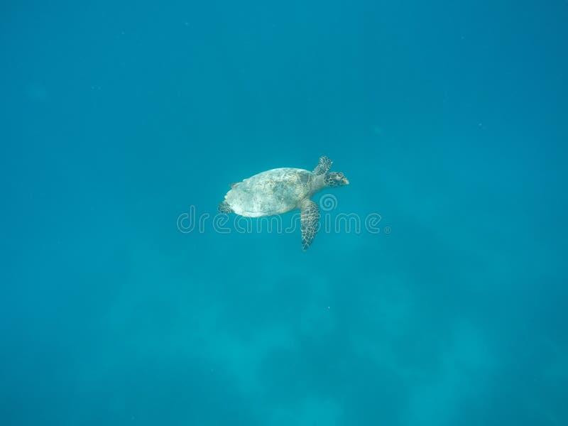 PIC de tortue images stock
