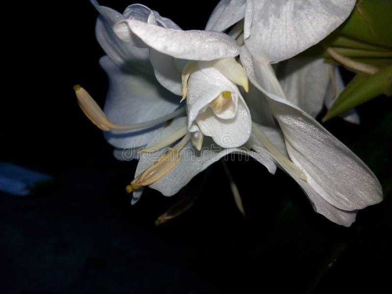 Pic del fiore immagine stock libera da diritti
