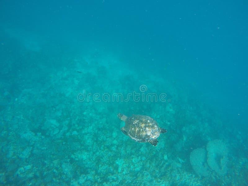PIC des Maldives photographie stock