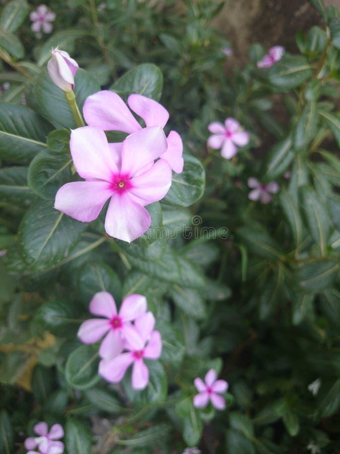 PIC naturelle des fleurs images libres de droits
