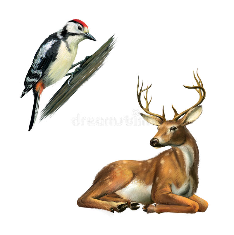 Pica-pau e cervos ilustração royalty free