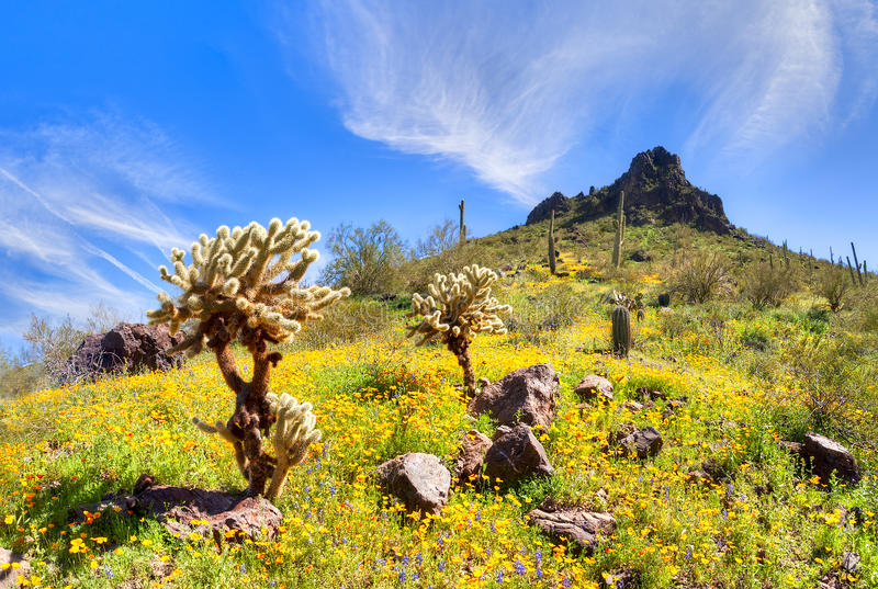 Picacho Peak State Park. Blooming Poppies at Picacho Peak State Park royalty free stock photography