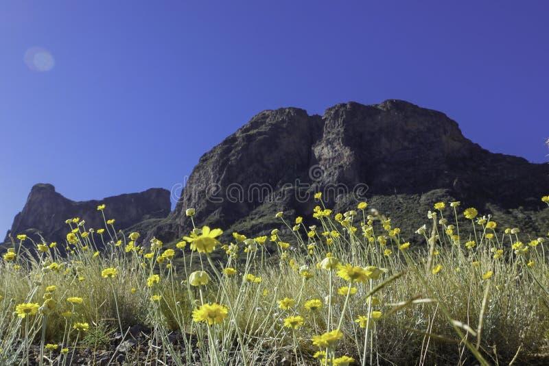 Picacho szczyt z Wildflowers fotografia royalty free