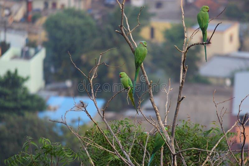 Picada do pássaro do papagaio na árvore fotos de stock royalty free