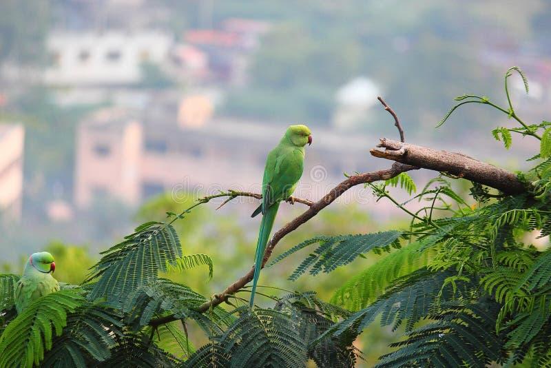 Picada do pássaro do papagaio na árvore fotografia de stock royalty free