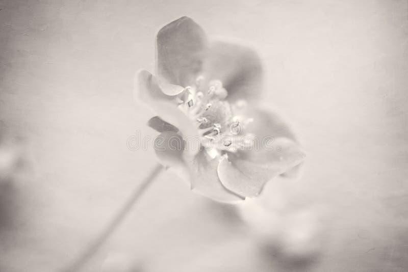 Picado ENCIMA de la versión blanco y negro imágenes de archivo libres de regalías