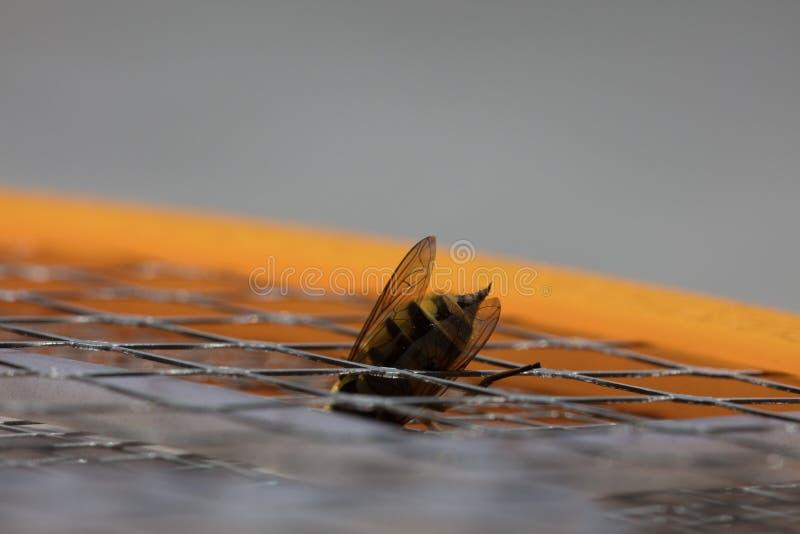 Picadura de abeja macra imagenes de archivo