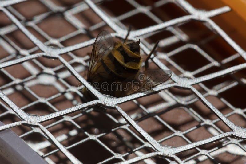 Picadura de abeja macra imágenes de archivo libres de regalías