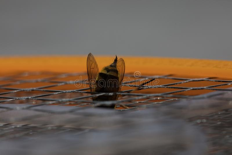 Picadura de abeja macra imagen de archivo